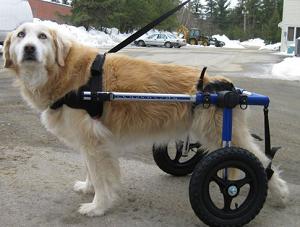 Le chariot pour chien, la solution pour aider Texane