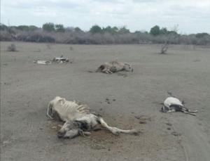 La famine se propage en Afrique