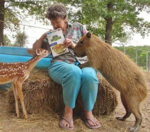 Des refuges pour tous les animaux