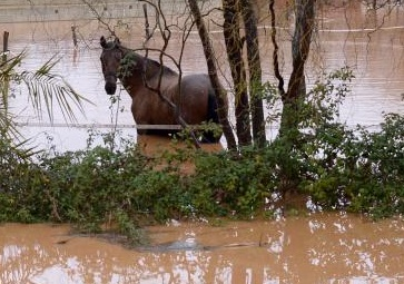 Il faut rapidement intervenir pour sauver les chevaux
