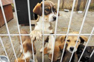 Un des refuge de la fondation assistance aux animaux
