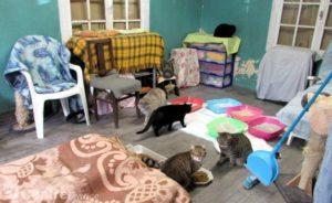 L'école du chat