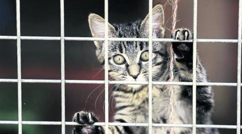 Cagnotte en ligne animaux sans commission