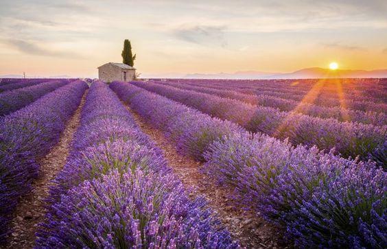 Les plus belles choses à faire en Provence tourisme