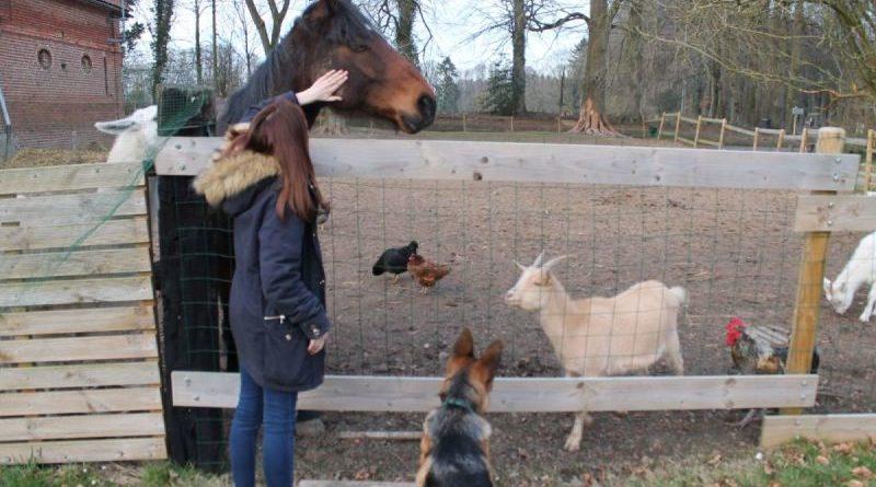 Allez à la rencontre des animaux avec l'Effet des fées