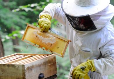 Une production souvent en chute chez les apiculteurs impactés