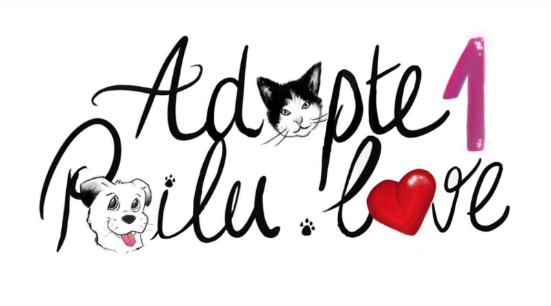 Adopte 1 poilu chats