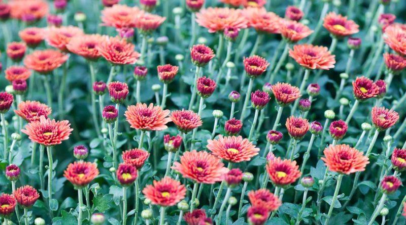 Fleurs pour un enterrement faire le bon choix